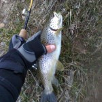 burnsville nc fishing guide