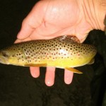 burnsville nc fishing guides