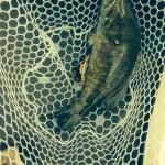 burnsville nc fly fishing shop