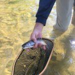 burnsville wnc fly fish