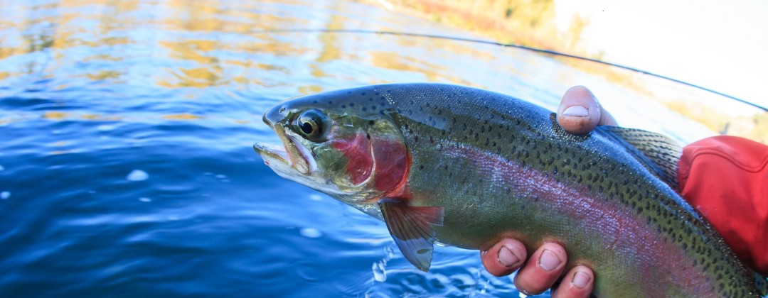 burnsville nc fly fishing guide